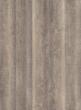 Smooth Oak (Rocky Mountains)